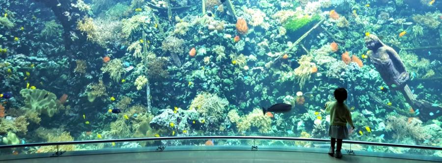 HEADER aquarium